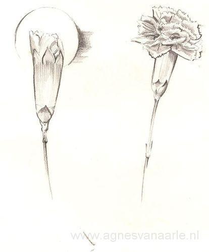 Potloodtekening van bloem