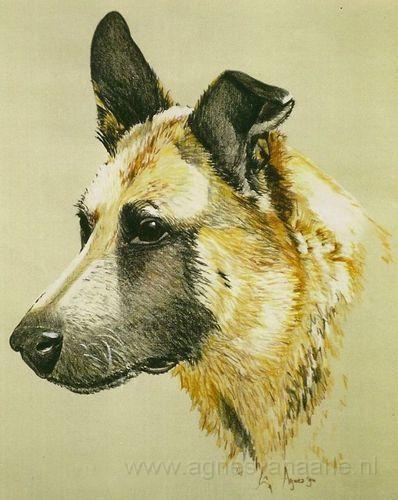 Krijttekening hond