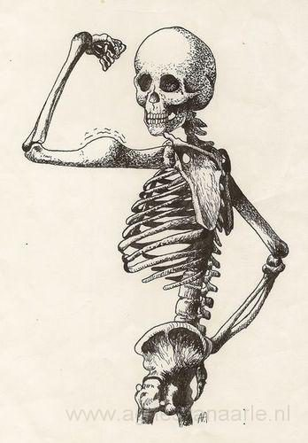 Pentekening skelet