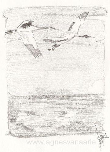 Potloodtekening kraamvogels