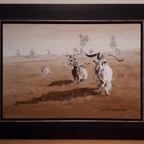 Landgeiten op de hei